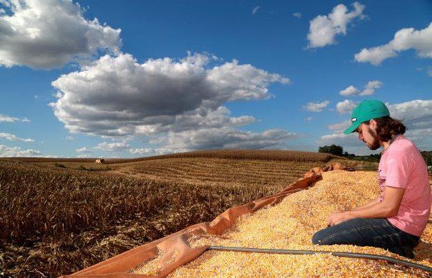 colheita-de-milho-em-campos-novos-foto-julio-cavalheiro-secom