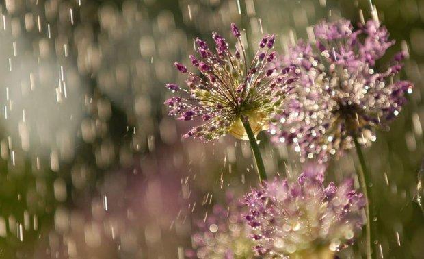 chuva_primavera